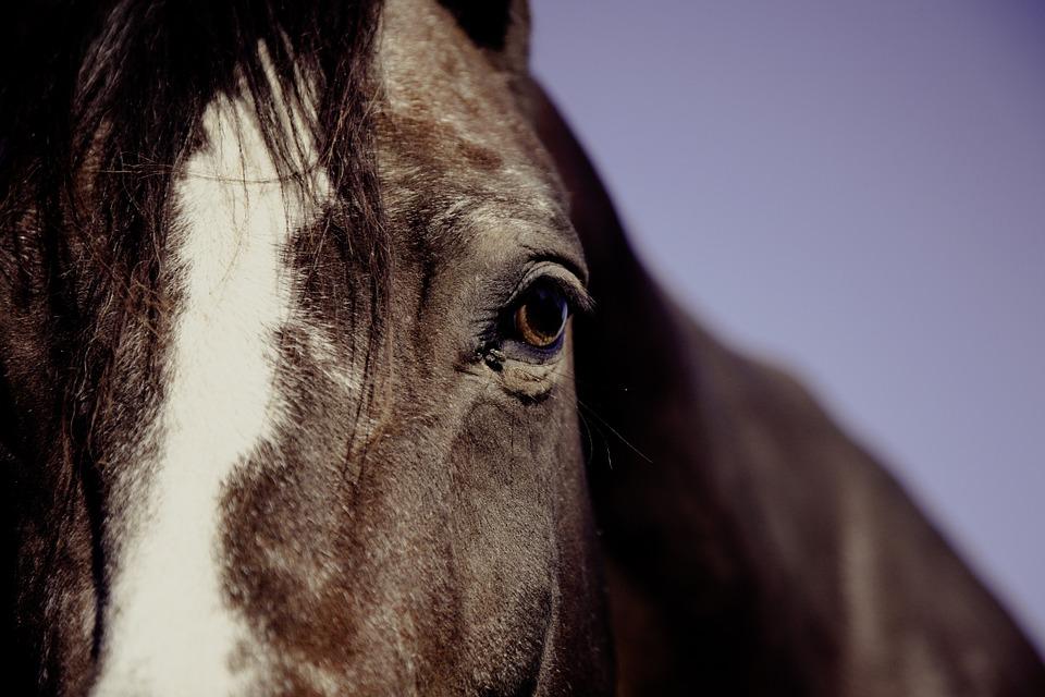 Les effets de la communication animale